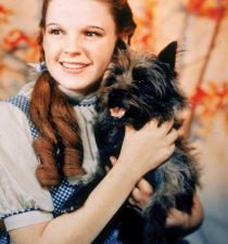 Judy Garland's picture
